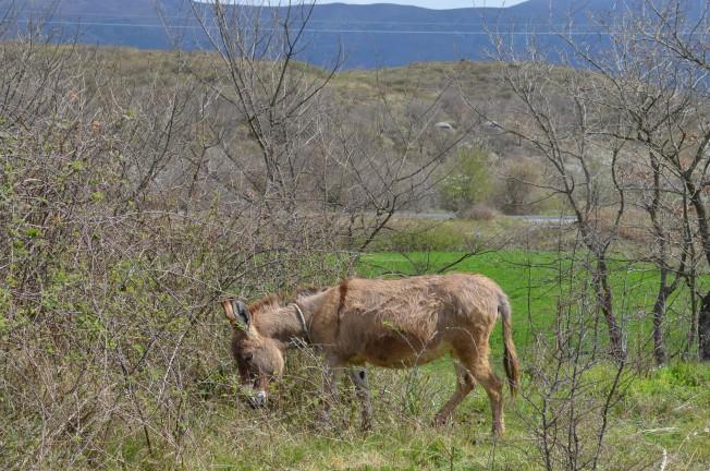 Donkey Photo: Clare
